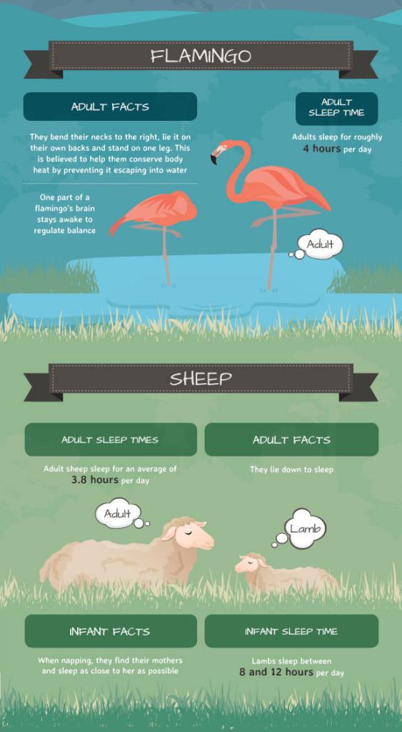 4 Animal Sleep