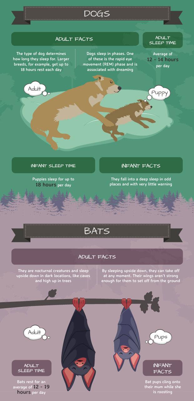 5 Animal Sleep